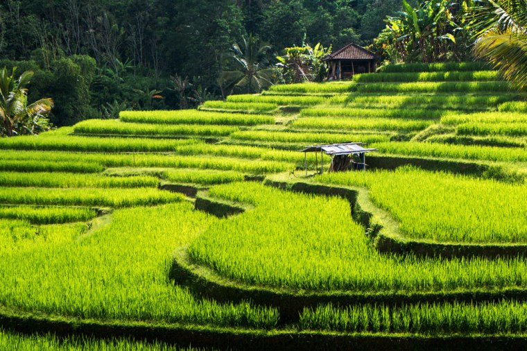 Bali-Reisterrassen