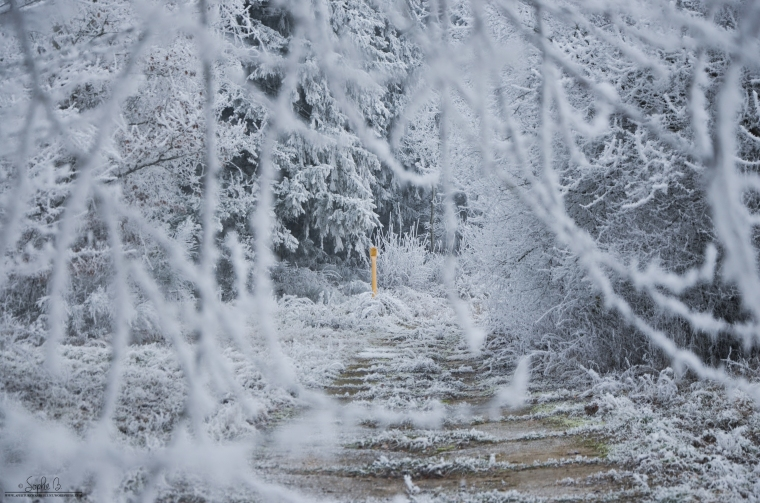 Winter-Travel-5