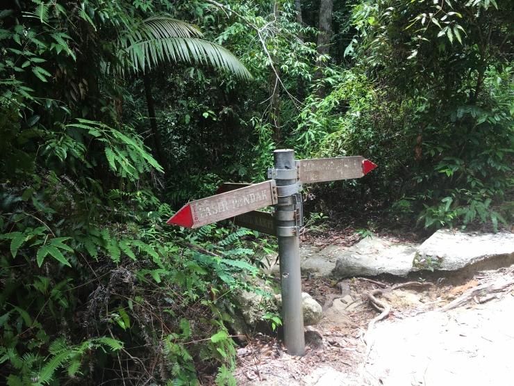 Jungle-7