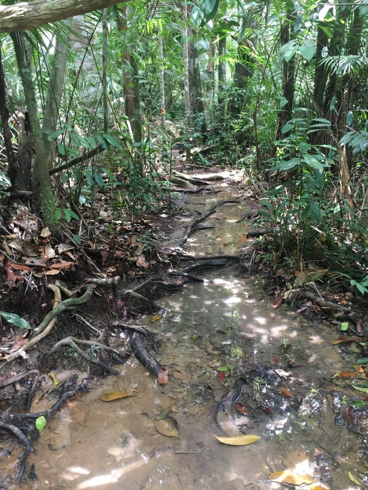 Jungle-9