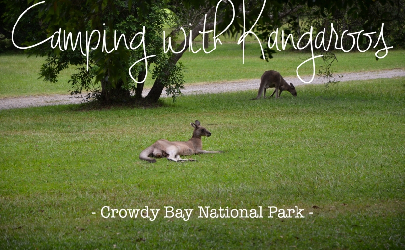 Camping with Kangaroos |Crowdy Bay NationalPark